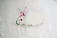 Rabbit-Drawing-by Aleksandra Smiljkovic Vasovic aleksandraartworkcom